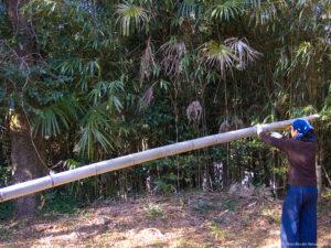 製作風景-【準備】コウガイ用の竹を伐採