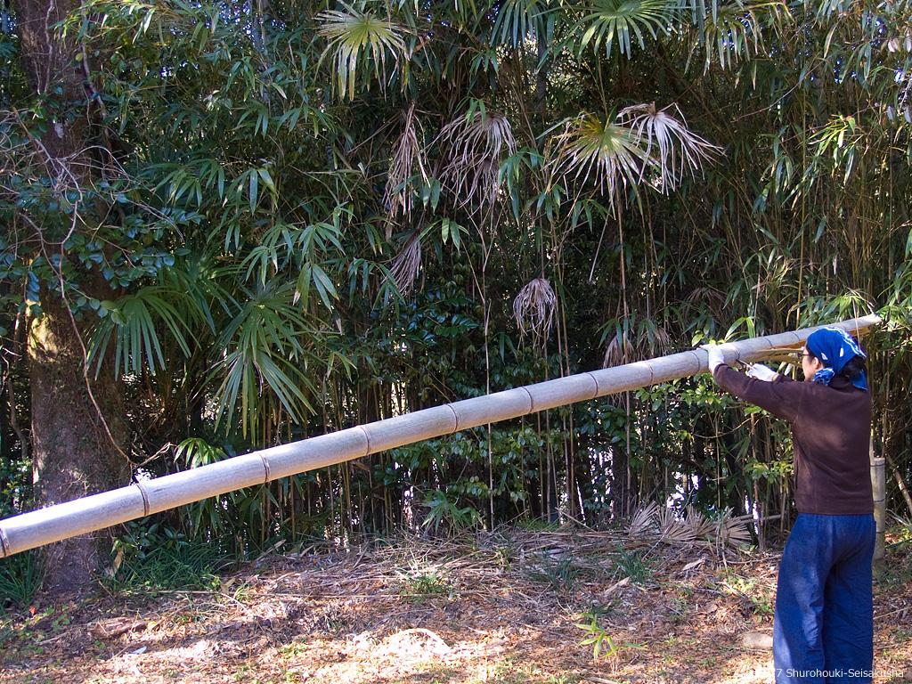 棕櫚箒のコウガイ用の竹を切り出す