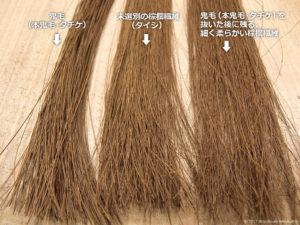 同量の棕櫚繊維の比較3