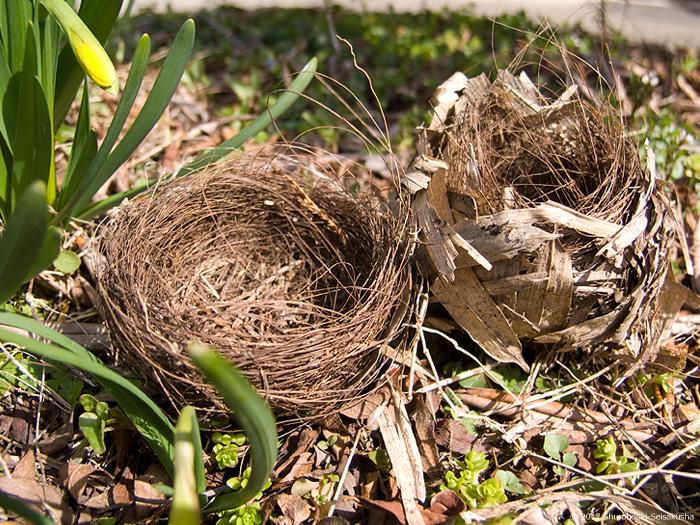 棕櫚で作られた野鳥の巣