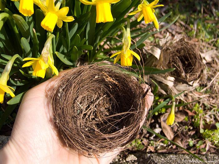 棕櫚製の野鳥の巣