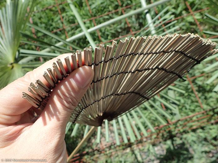 棕櫚葉のハエ叩きの材料下準備