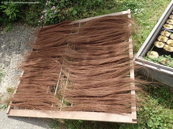 棕櫚箒-棕櫚二番毛の毛ごしらえと原料選別